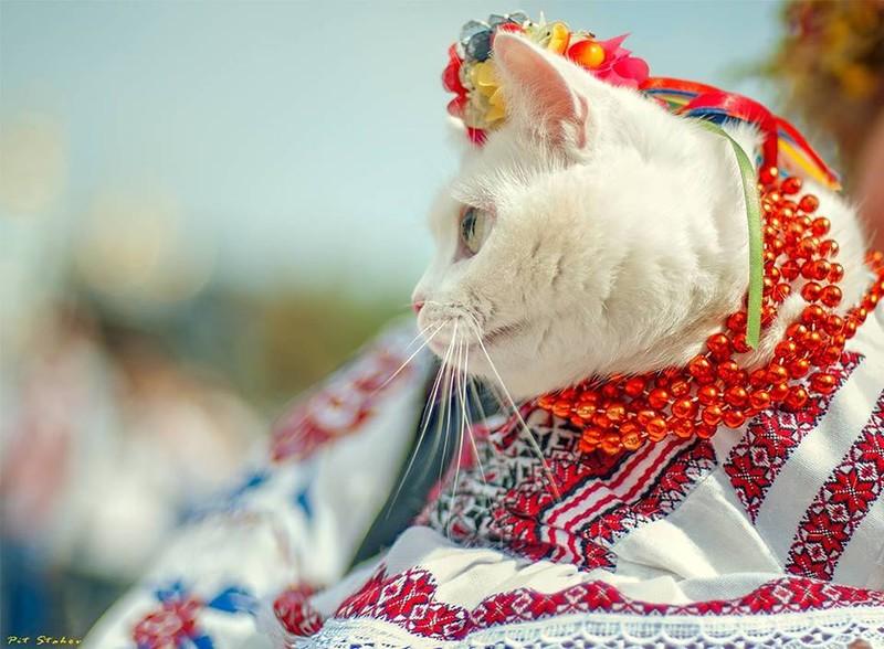 """1 березня - Всесвітній день котів - """"Репортер"""""""