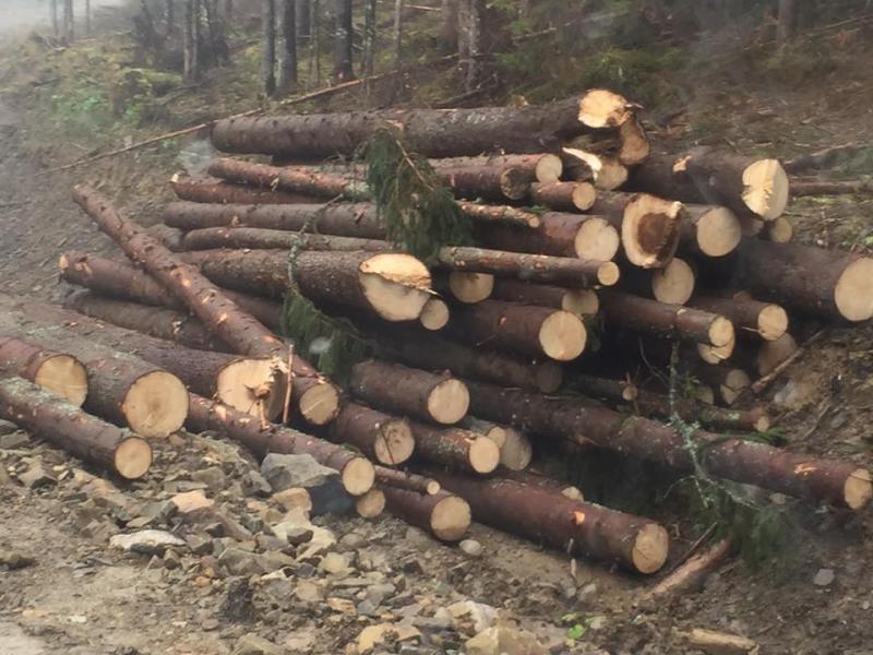 """Результат пошуку зображень за запитом """"Мешканці села Тисменичани намагаються зламати систему розкрадання тутешнього лісу"""""""