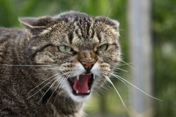 У травні на Прикарпатті проведуть імунізацію диких тварин проти сказу