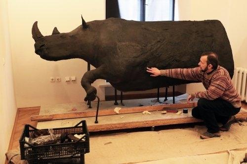 У Львові відреставрували знайденого на Франківщині волохатого носорога, який вимер 10 000 років тому (фотофакт)