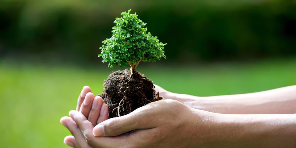 Франківцям пропонують посадити «Пам'ятне дерево»