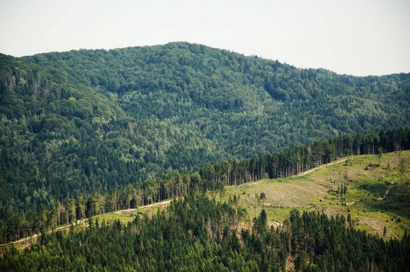 Реформа добралась до лісів. На Франківщині ОТГ рахують майбутні прибутки, у лісгоспах бояться банкрутства