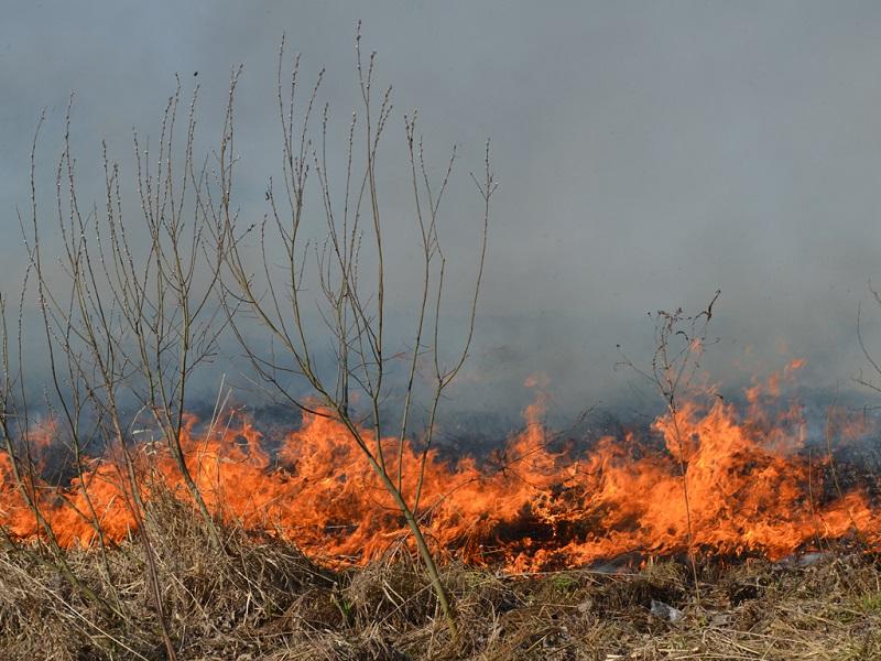 """""""Порєдні ґазди"""", які палять траву на Прикарпатті, стали людьми тижня у """"Репортері"""""""