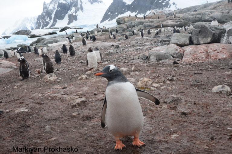 Франківець Маркіян Прохасько поділився враженнями від життя на станції «Академік Вернадський» у Антарктиді (фото+відео)