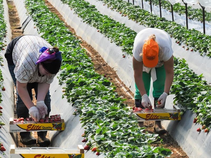 Прикарпаття на заробітках: як за кордоном не втратипи в халепу